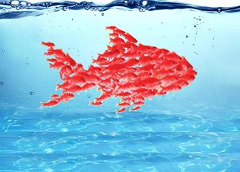 red goldfish book
