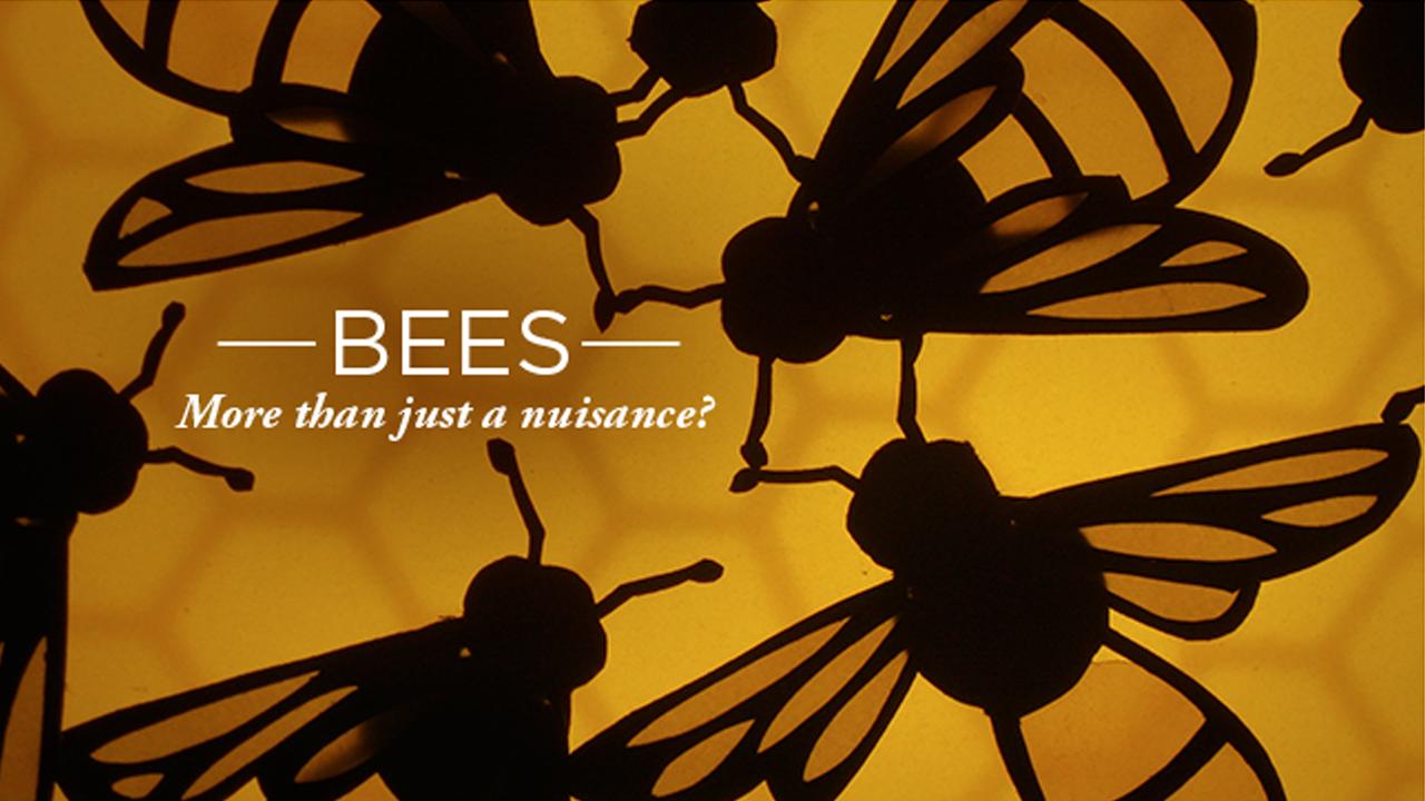 Burt's Bees-70880